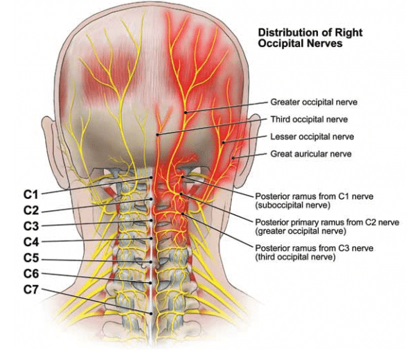 Occipital-neuralgia-nerves